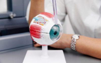 modelo-ojo-anatomico-ampliado-muestras-laboratorio_175935-196